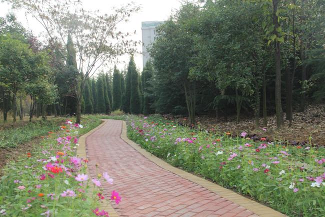 花径不曾缘客扫,蓬门今始为君开。远离闹市的喧嚣,漫步在秋意盎然的龙泉植物园,观赏着美不胜收的风景,呼吸着清新的空气,倾听着不知名的鸟鸣,让人感到无比的舒畅惬意。花径、湖面、小道,更给美丽的园景涂抹上一层斑驳的色彩,别有一番风味。   龙泉植物园位于滕州市城区东北部,总占地面积225亩,其中水面约26亩,园内栽植乔冠花草200余个品种,30余万株。这是我市本着挖掘潜力、合理布局、生态优先、多措建园理念,以创建国家园林城市为契机,自2014年,利用1年多的时间,打造的一处集科普、休闲、娱乐为一体的综合性植物